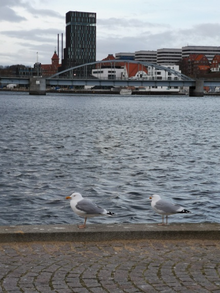 Måger i Sønderborg.jpg